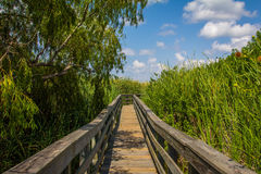 Grassland Boardwalk Stock Image