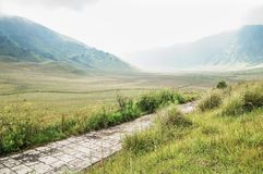 Grassland of Bromo royalty free stock image