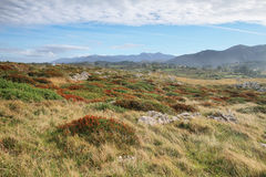 Grassland in bufones de Pria (blowholes) Stock Photography