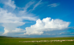 Grassland of China. Beautiful nature is our precious property Stock Photo