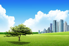 Grassland with city Stock Image