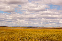 Grassland and cloudscape Stock Images