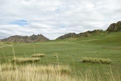 Grassland. Cloudy grassland Qinghai-Tibet Plateau stock photo