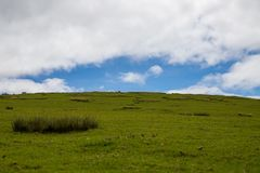 Grassland with a cloudy sky royalty free stock image