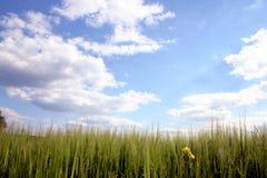 Grassland com céu Imagem de Stock
