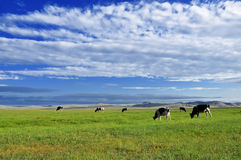 Grassland and cow Royalty Free Stock Photos