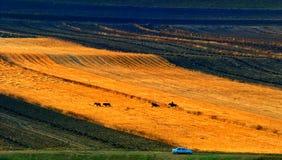 Grassland cowboy Royalty Free Stock Image