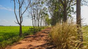 Grassland and  a dirt road Royalty Free Stock Image