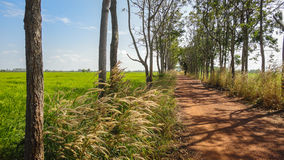 Grassland and  a dirt road Stock Image