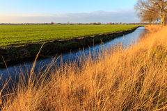 A grassland and ditch at sunset in a dutch landscape Royalty Free Stock Photography