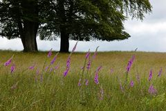 Grassland, Ecosystem, Field, Meadow stock photos