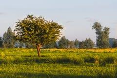 Grassland, Ecosystem, Field, Prairie stock photography