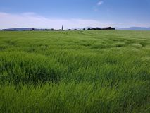Grassland, Ecosystem, Prairie, Field royalty free stock image