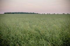 Grassland, Ecosystem, Prairie, Field stock photos
