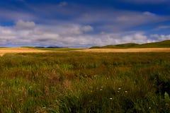 Grassland, Ecosystem, Prairie, Sky royalty free stock images