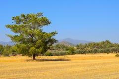 Grassland, Ecosystem, Savanna, Field royalty free stock photo