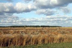 Grassland, Ecosystem, Sky, Prairie royalty free stock photography