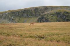 Grassland, Ecosystem, Wildlife, Wilderness