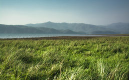 Grassland in evening Stock Image