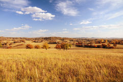 Grassland in the fall Royalty Free Stock Photo