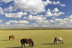 Grassland and farm horse in inner mongolia Royalty Free Stock Photography
