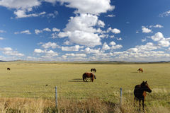 Grassland and farm horse in inner mongolia Royalty Free Stock Photo