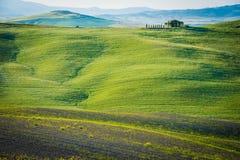 Grassland, Field, Ecosystem, Green stock image