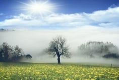 Grassland, Field, Sky, Meadow stock image