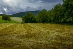 Grassland, Field, Sky, Pasture royalty free stock photos