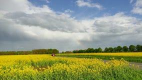 Grassland, Field, Sky, Rapeseed stock photo