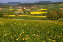 Grassland, Field, Yellow, Meadow stock photography