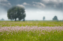 Grassland and flowers Royalty Free Stock Image