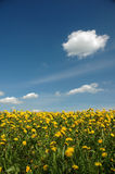 Grassland with flowers. And blue sky with a few clouds Stock Images