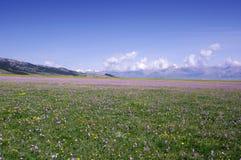 Grassland flowers. By the Sailimu Lake Stock Photo