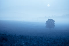 Grassland in fog Royalty Free Stock Photography