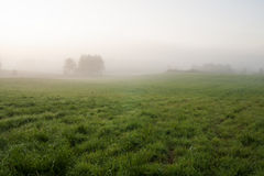 Grassland and fog at dawn Stock Image