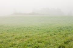 Grassland and fog at dawn Royalty Free Stock Image