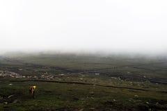 Grassland in  fog Stock Images
