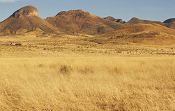 Grassland in the foothills Royalty Free Stock Images
