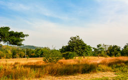 Grassland forest and sky Royalty Free Stock Photography