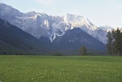Grassland in front of mountains Stock Image