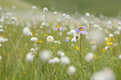 Grassland full of flowers Stock Image
