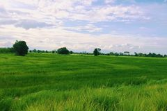 A grassland. Grass green view in Thailand Royalty Free Stock Photos