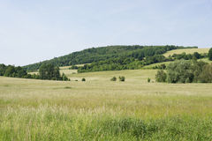 Grassland green spring landscape meadow with hill forest Stock Photos