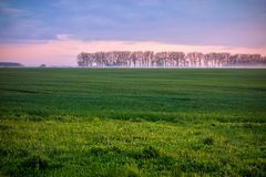 Grassland with hazy tress in the background at sunset. Arable land from low angle and foggy tress in the background at sunset Stock Image