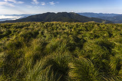 Grassland on high mountain Stock Photos