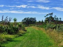Grassland hiking trail with bushes and trees. On Motuihe Island near Auckland Royalty Free Stock Photo