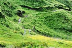Grassland on hillside Stock Photography