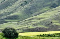 Grassland on hillside Stock Photos