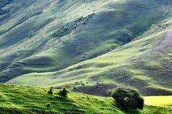 Grassland on hillside Royalty Free Stock Photo